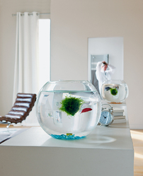 pompe aquarium mod les et prix comprendrechoisir. Black Bedroom Furniture Sets. Home Design Ideas