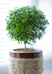 Engrais plante d 39 int rieur comprendrechoisir for Arbre d interieur appartement