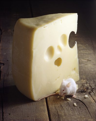 Certains fromages sont bons 2 semaines